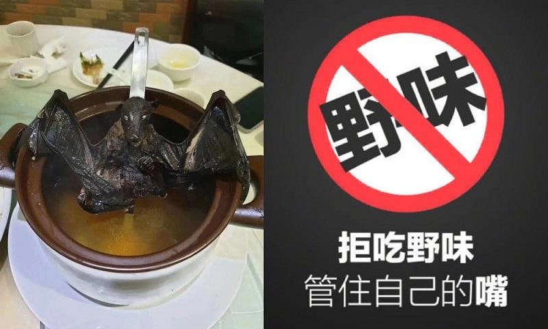 """Многочисленные видео и фото, изображающие """"суп из летучей мыши"""", заполнили социальные сети. Источник: What's on Weibo"""