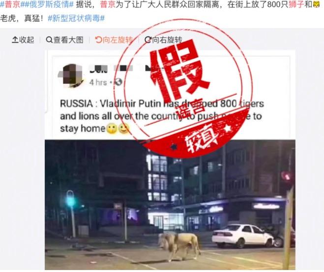 Дезинформация: Путин выпустил львов и тигров на улицы